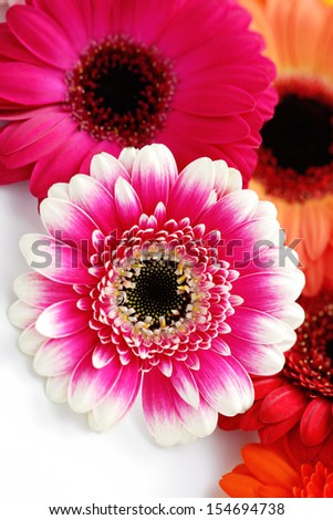 colorful gerbera flowers - flowers and plants - stock photo