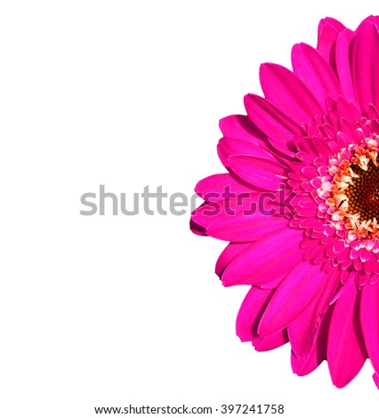 Colorful gerbers flowers isolated on white background - stock photo