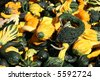 Colorful Gourds Signal the Fall Season - stock photo