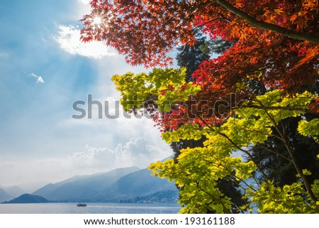 Colorful green and red maple trees overlook lake Como in northern Italy. Sun streaming through foliage. Idyllic Summer scene with lake, mountains and clouds in background. Room for copy on the left.