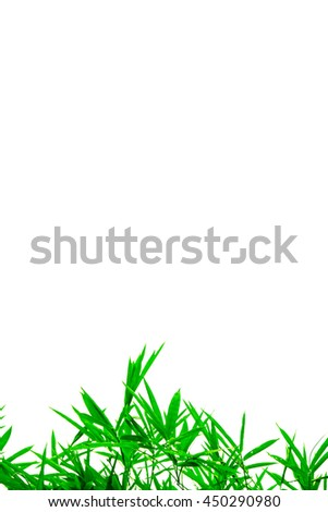 colorful Green leaves isolated on white background and free copy space - stock photo