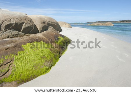 Colorful green sea weed on rock at white beach at Bay of Fire, Tasmania, Australia, with turquoise ocean water, popular summer tourist destination at St Helens, copy space. - stock photo