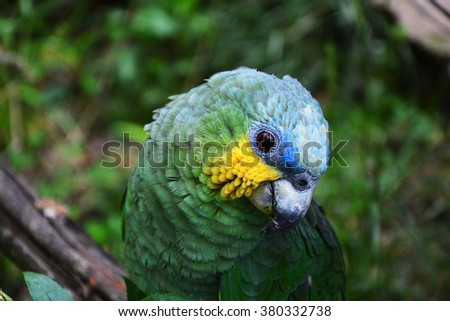 Colorful green tropical bird with yellow and blue highlights in natural surroundings