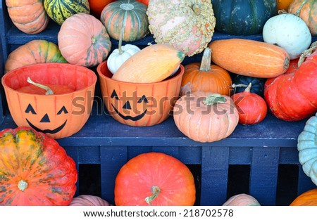 Colorful halloween pumpkins and gourds display at the market - stock photo