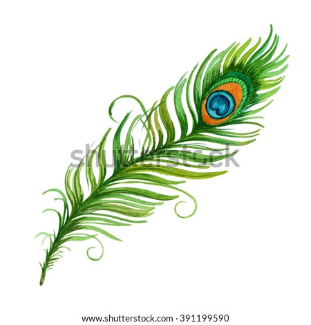 Colorful hand drawn watercolor vibrant peacock feather. Boho style. illustration isolated on white background. Bird fly design for T-shirt, invitation, wedding card.Rustic Bright colors.  - stock photo