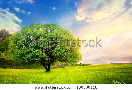 colorful HDR landscape tree in clear green and blue nature - stock photo