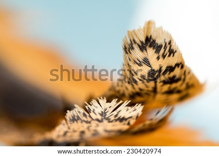 Colorful hen feather with details and reflexions