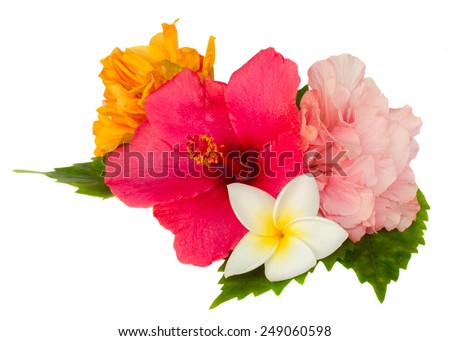 colorful  hibiscus and frangipani flowers isolated on white background - stock photo