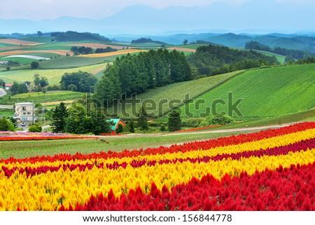Colorful Hill at Biei, Hokkaido - stock photo
