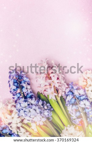 Colorful hyacinths on light pink background, top view, place for text. Spring greeting card.