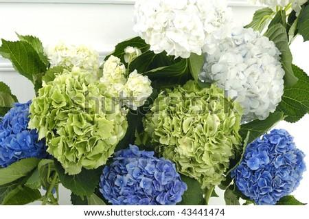 colorful hydrangea background - stock photo