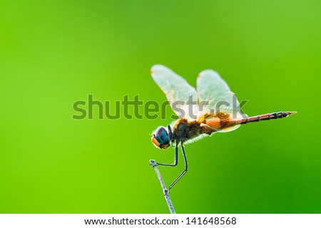 Colorful image of a dragonfly on a green background