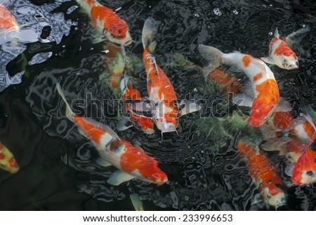 Fish pond stock images royalty free images vectors for Garden state koi