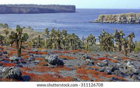Colorful landscape of South Plaza Island, Galapagos Islands, Ecuador - stock photo