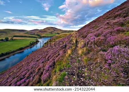 Colorful landscape scenery with a footpath through the hill slope covered by violet heather flowers and green valley, river, mountains and cloudy blue sky on background. Pentland hills, Scotland - stock photo