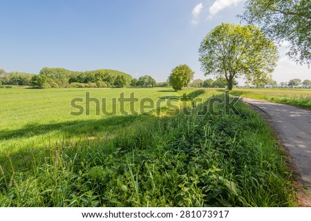 Colorful landscape with fresh growing and blooming plants in the spring season.