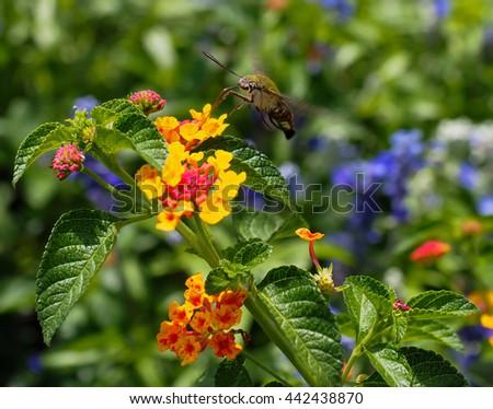 Horticulturalista da consejos sobre la atracción de colibríes - [225]
