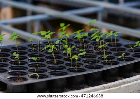Colorful lattuce salad saplings in a greenhouse