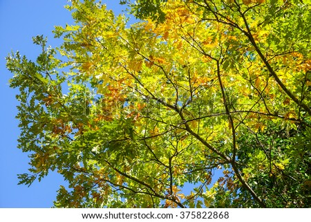 Colorful leafs of autumn forest in Italian Umbria