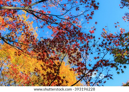 Colorful leafs with blue sky background