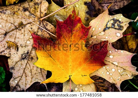 colorful leaves and rain fall in autumn - stock photo