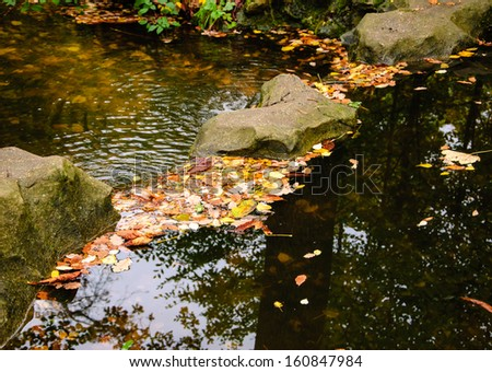 Colorful leaves and rocks in creek. Autumn in forest.