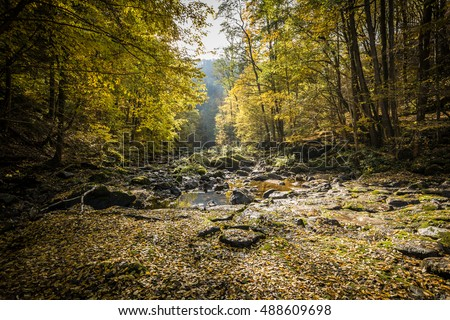 Colorful leaves and rocks in water stream in autumnal forest clearing