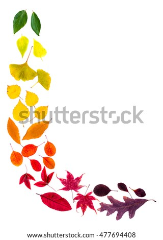Colorful leaves arranged into the L-shape corner. Autumnal mood with natural materials