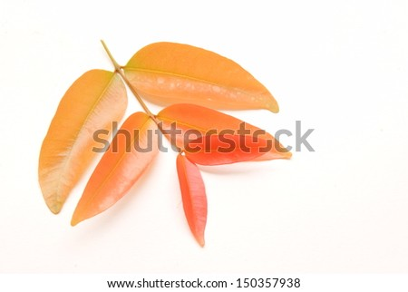 colorful leaves isolated on white background