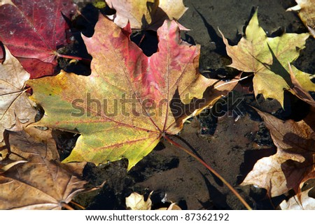 Colorful leaves lying in wate - stock photo