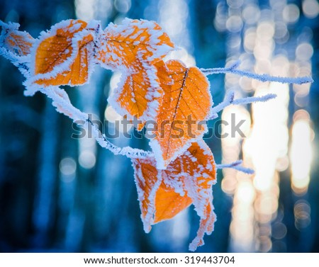 colorful leaves of the tree covered with snow  - stock photo