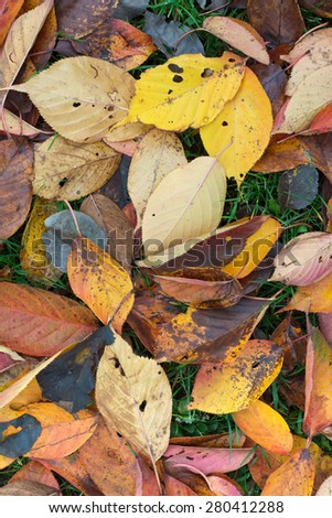 Colorful Leaves on a Sunny Autumn Day - stock photo