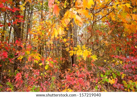 Colorful leaves on the trees in the fall season