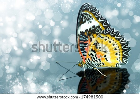 Colorful Leopard Lacewing butterfly on isolate background - stock photo