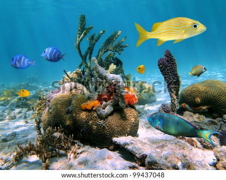 Colorful life in the Caribbean with coral, tropical fish and sponges - stock photo