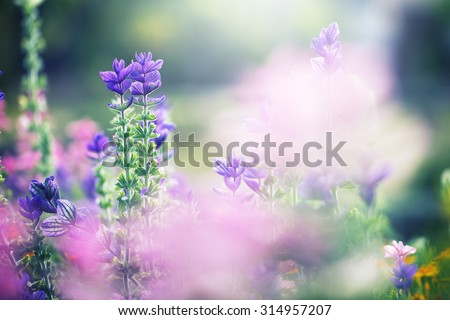 colorful lilac beautiful flowers in garden flowerbed on natural green background. Fresh summer photo