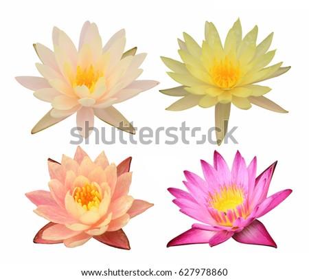 Colorful lotus flowers isolated on white stock photo image colorful lotus flowers isolated on white background mightylinksfo