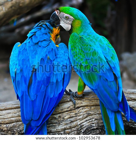colorful macaw - stock photo