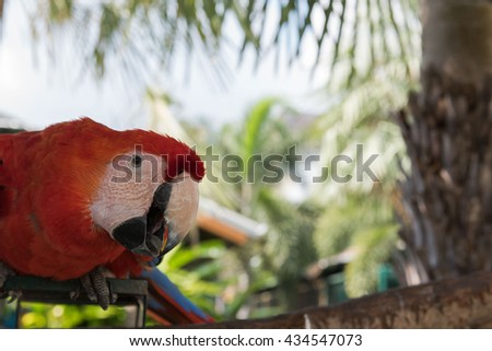 Colorful macaw birds in the garden, Parrot