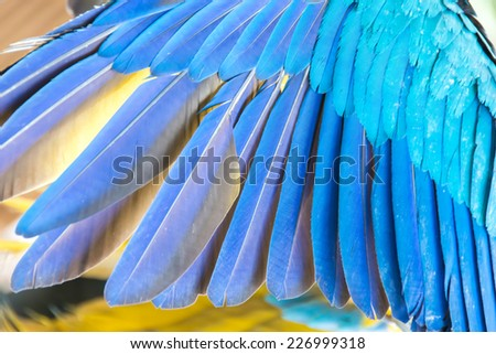 Colorful Macaw feathers