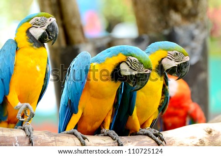 Colorful Macaw in line