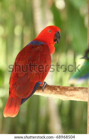 colorful Macaw parrot - stock photo