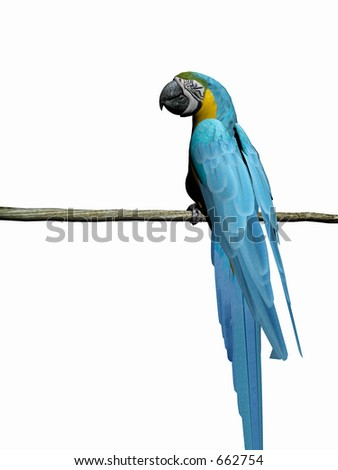 Colorful macaw,parrot 3D render, illustration over white. High resolution, detailed image.