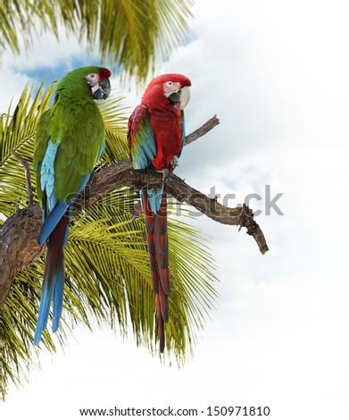 Colorful  Macaw Parrots Perching On A Branch - stock photo