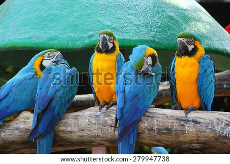 Colorful macaw sitting on the log - stock photo