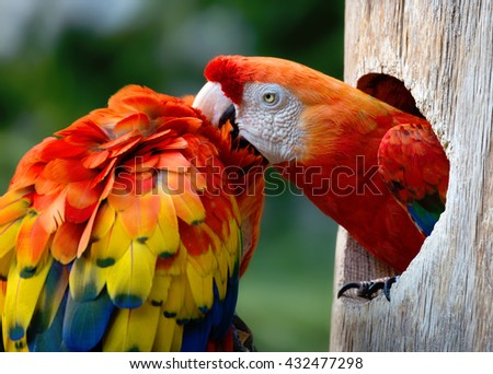 Colorful macaws on the tree