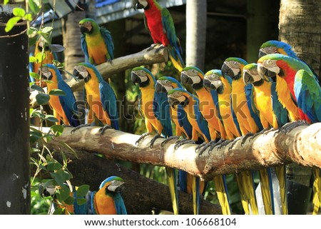 colorful macaws perched on a tree branch - stock photo