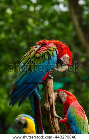 Colorful macaws standing on log