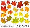 Colorful maple leaves collection isolated on white - stock photo