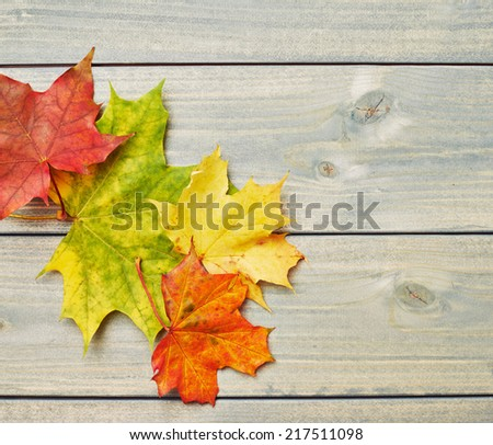 Colorful maple leaves over the painted green wooden boards as an autumn background composition - stock photo